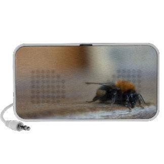 Altavoz del Doodle del abejorro