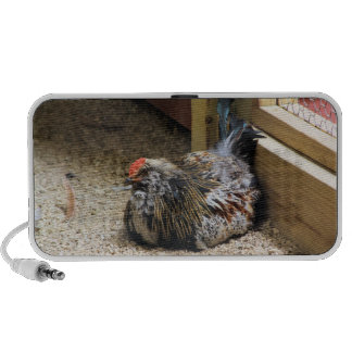 Altavoz del pollo