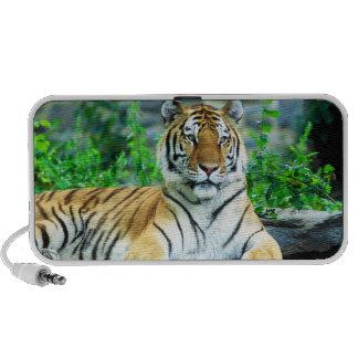 Altavoz del tigre siberiano