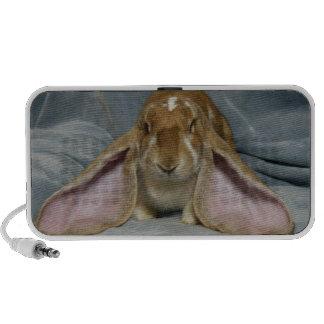 Altavoz inglés del conejo de conejito del Lop para