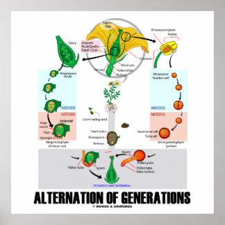 Alternación de las generaciones (ciclo vital de la póster
