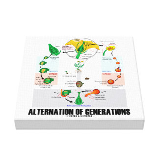Alternation Of Generations (Flower Life Cycle) Canvas Print
