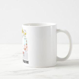 Alternation Of Generations (Flower Life Cycle) Coffee Mug