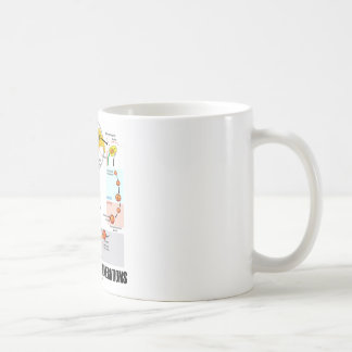 Alternation Of Generations (Flower Life Cycle) Classic White Coffee Mug