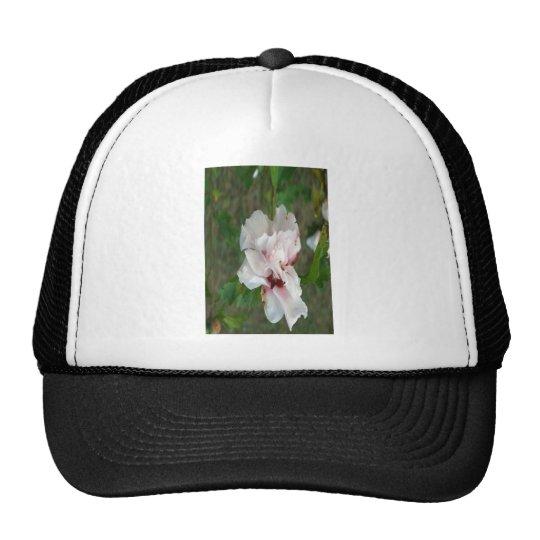 Althea 2 trucker hat