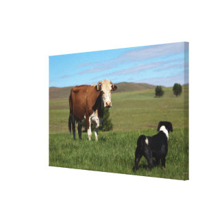 Although Cows and dogs are from different Canvas Print