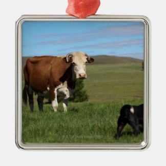Although Cows and dogs are from different Metal Ornament