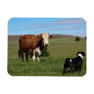 Although Cows and dogs are from different Rectangular Photo Magnet
