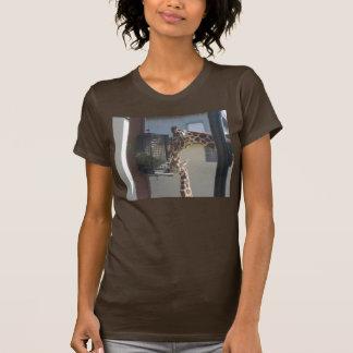 altitud y attitdue camisas