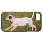 Alto ángulo de un perro que miente en dormir de la iPhone 5 carcasa