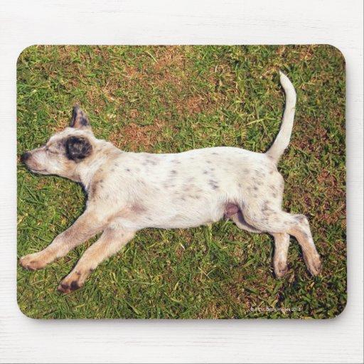 Alto ángulo de un perro que miente en dormir de la tapete de ratones