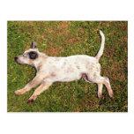 Alto ángulo de un perro que miente en dormir de la tarjetas postales