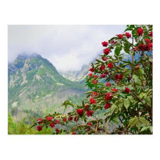 Alto Tatras Eslovaquia Tarjetas Postales