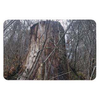 Alto tocón de árbol del parque iman flexible
