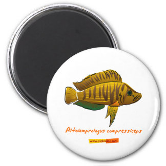 Altolamprologus compressiceps 2 inch round magnet