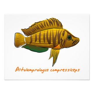 Altolamprologus compressiceps personalized invitation