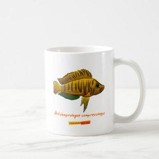 Altolamprologus compressiceps mug