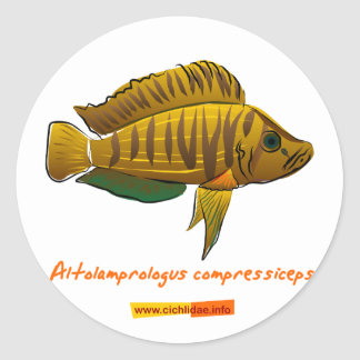 Altolamprologus compressiceps sticker