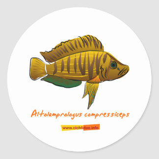 Altolamprologus compressiceps classic round sticker