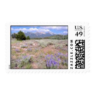Altramuz salvaje en el alto desierto de Idaho Timbres Postales