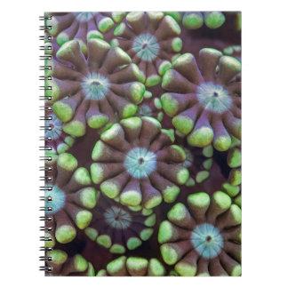 Alveopora pattern spiral notebook