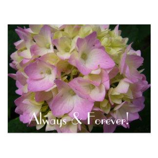 Always & Forever! Postcard