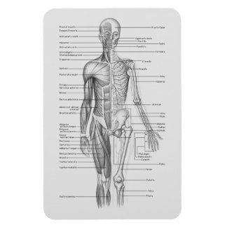 Always Learning: Human Body Anatomy Chart Magnet