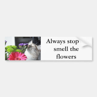 always stop to smell the flowers bumper sticker