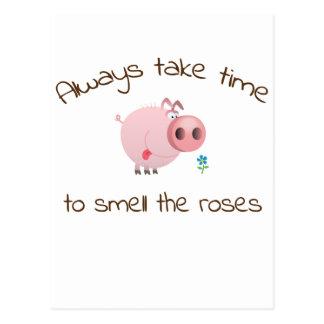 Always take time cute pig / piggy postcard