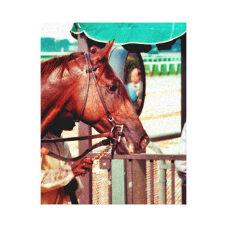 Alydar Thoroughbred 1979 Canvas Print