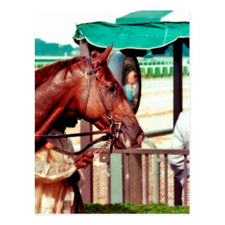 Alydar Thoroughbred Racehorse 1979 Postcards
