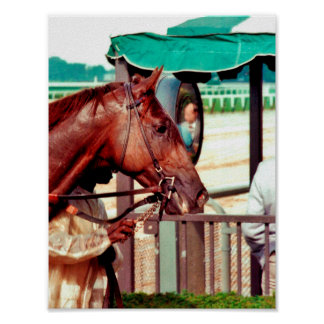 Alydar Thoroughbred Racehorse 1979 Posters