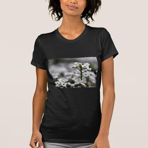 alyssum blanco cristalino claro camisetas