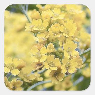 Alyssum del oro - Perennial Calcomania Cuadradas