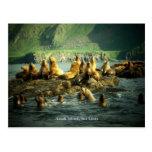Amak Island Sea Lions Postcard