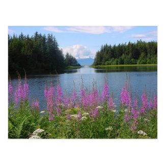 Amalga fireweed views postcard