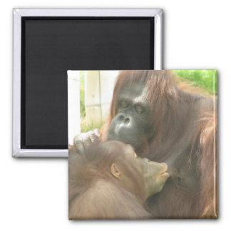 Amamantamiento del orangután imán cuadrado