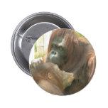 Amamantamiento del orangután pin redondo de 2 pulgadas