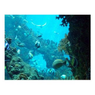 Amanecer de la edad del acuario… tarjeta postal