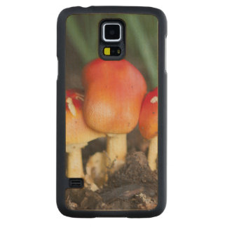Amanita family mushroom carved® maple galaxy s5 case