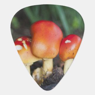 Amanita family mushroom guitar pick