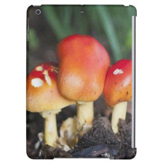 Amanita family mushroom iPad air covers
