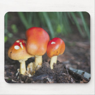 Amanita family mushroom mouse pad