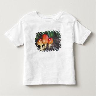 Amanita family mushroom toddler t-shirt