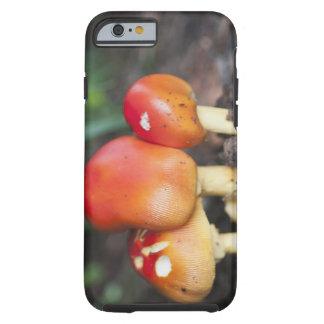 Amanita family mushroom tough iPhone 6 case