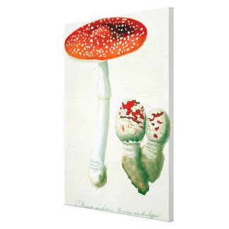Amanita Muscaria from 'Phytographie Medicale' by J Canvas Print