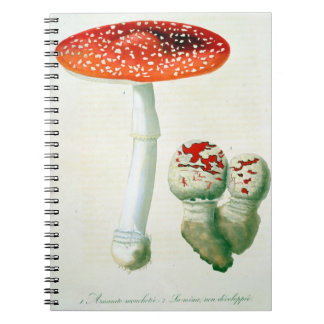 Amanita Muscaria from 'Phytographie Medicale' by J Journals