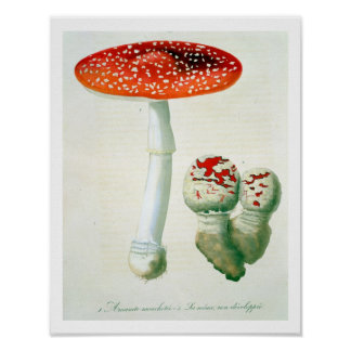 Amanita Muscaria from 'Phytographie Medicale' by J Poster