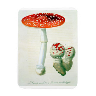 Amanita Muscaria from 'Phytographie Medicale' by J Vinyl Magnets