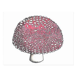 Amanita Mushroom Fungus Shroom Postcard